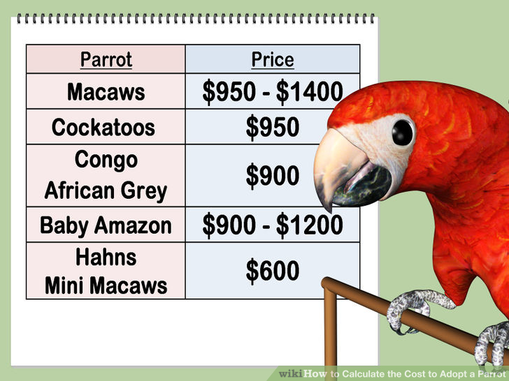 aid200738-728px-Calculate-the-Cost-to-Adopt-a-Parrot-Step-1.jpg
