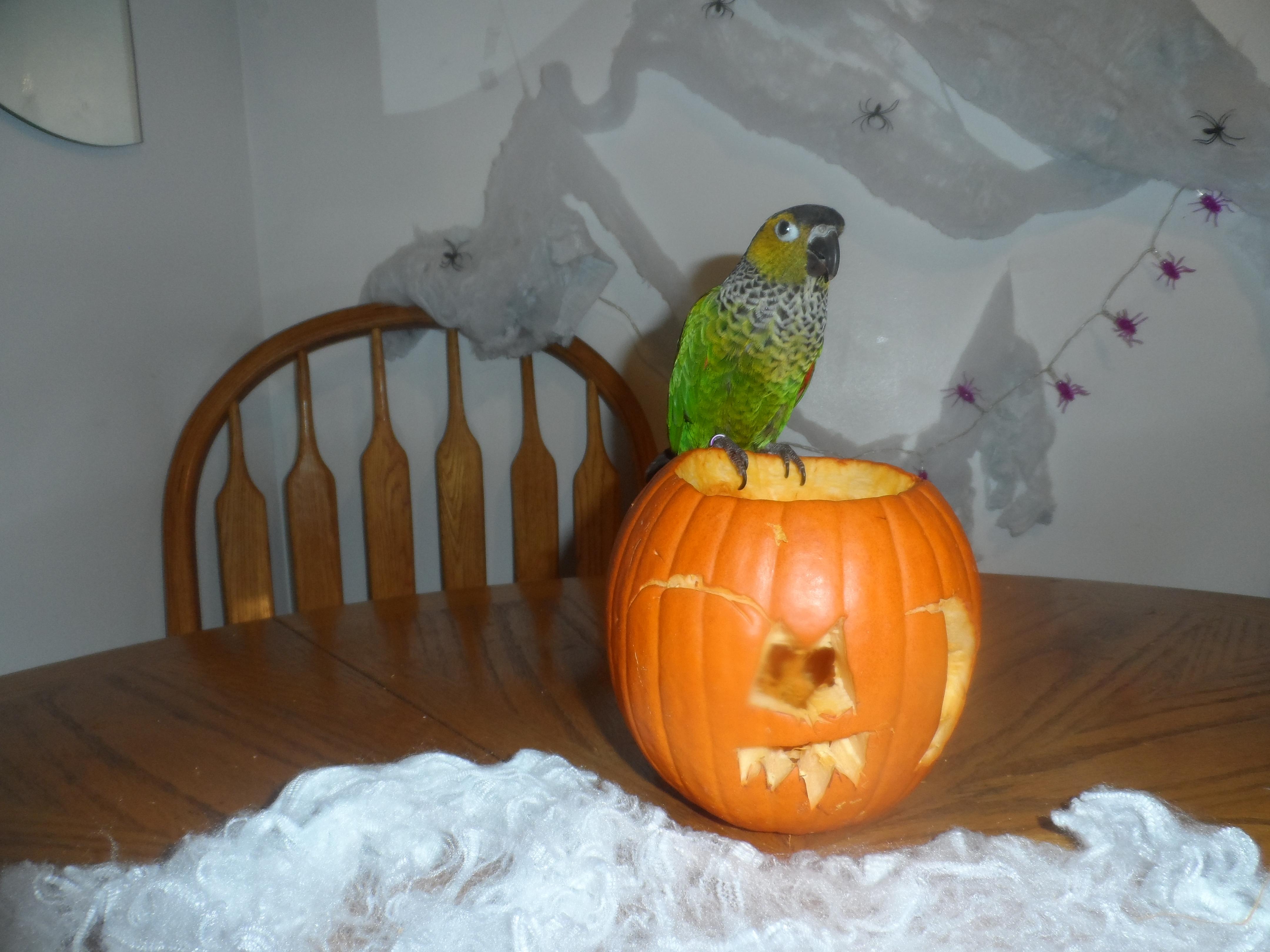 pumpkins-006
