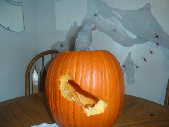 pumpkins-010