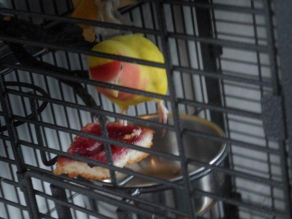 love-birds-food