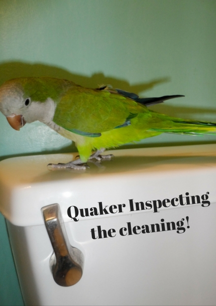 quaker-parrot-is-inspector-gadget