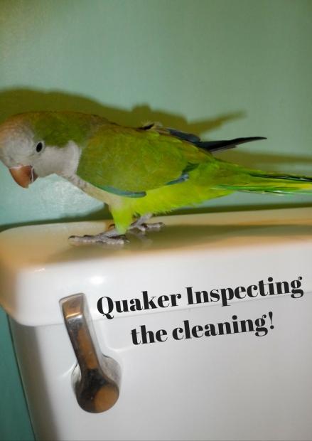 quaker-parrot-is-inspector-gadget