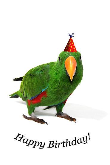 parrot birthday