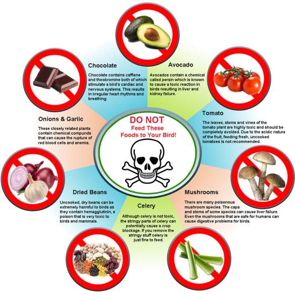 toxic_foods